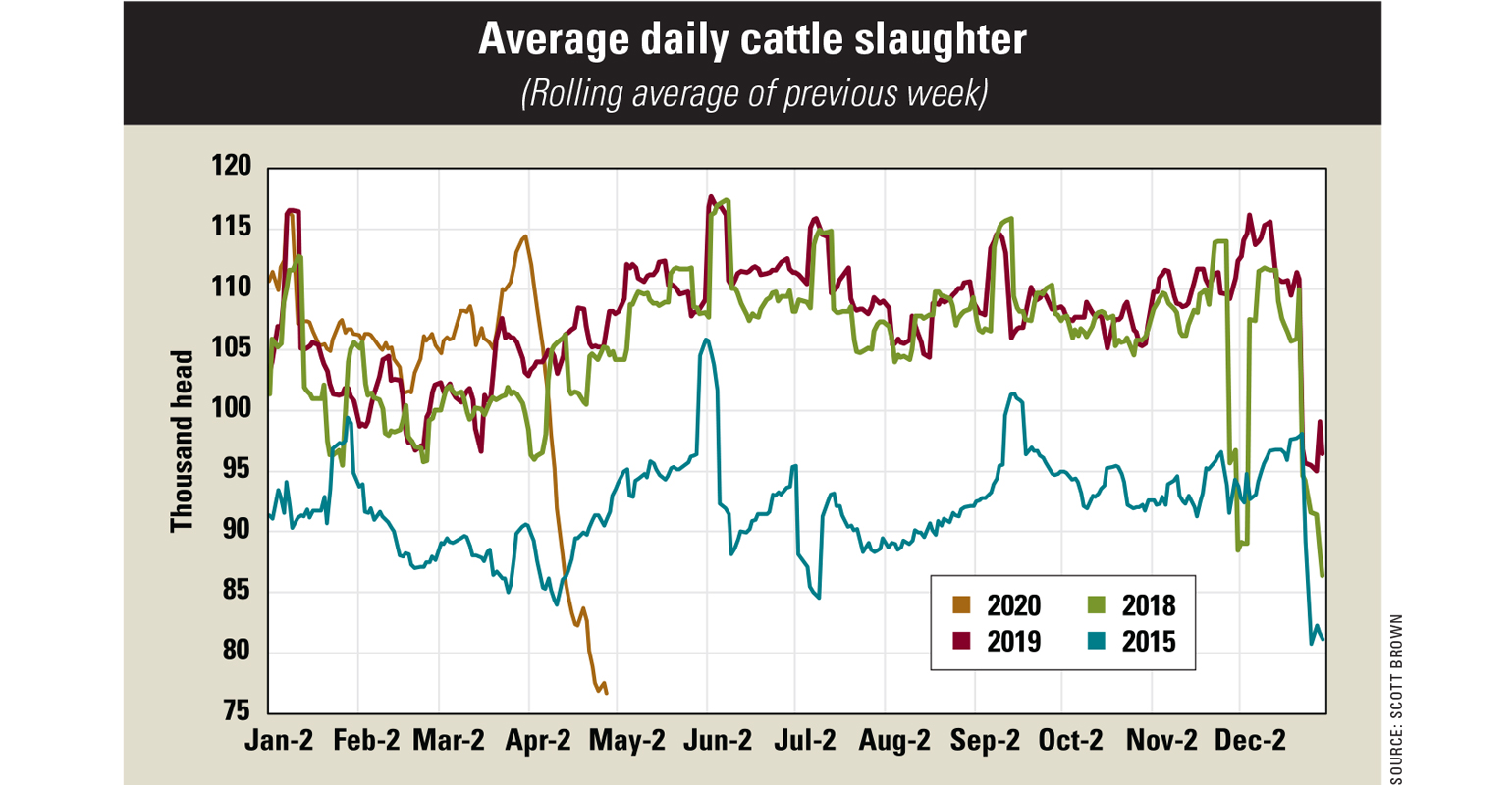 Graph showing the average daily cattle slaughter