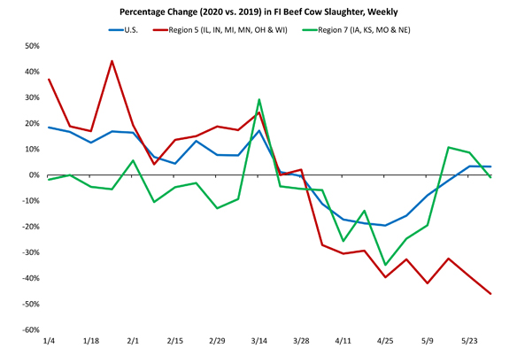 Percentage Change (2020 vs. 2019) in FI Beef Cow Slaughter, Weekly chart