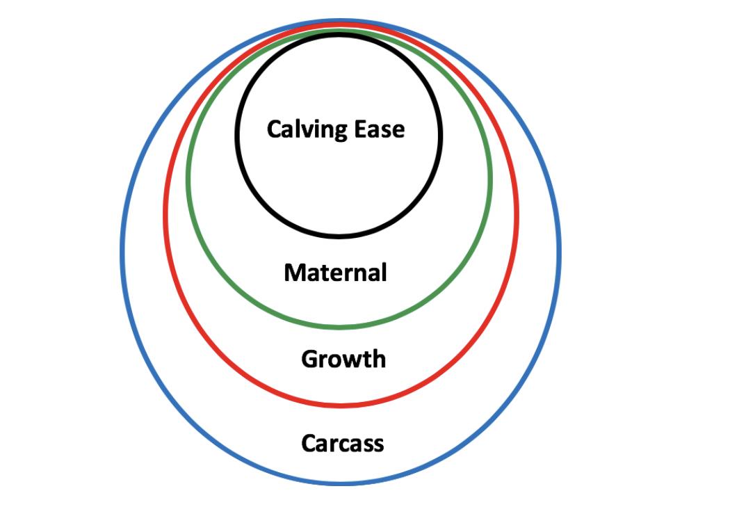 4 circles of genetic success